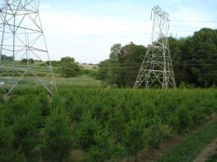 White Pine Field